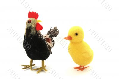 Duckling and cock