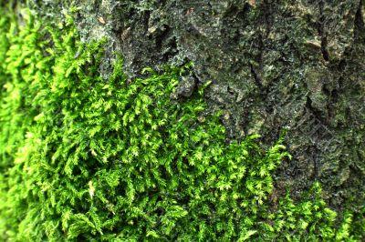 Grren moss