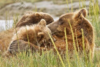 climbing mother bear
