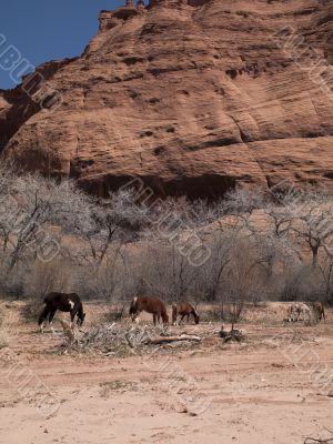 horses with bare tree and cliff in background