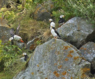 rocky habitat