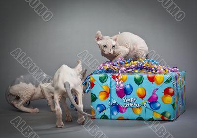 birthday elves