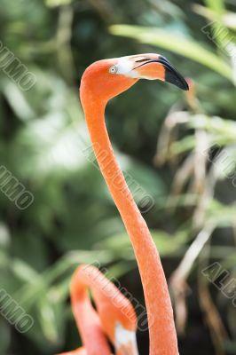 head and  neck of flamingo