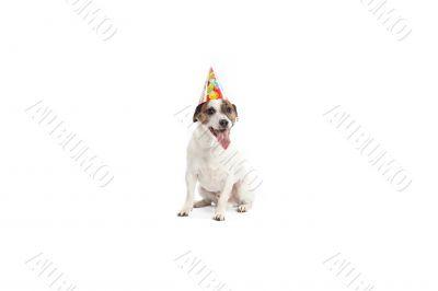 birthday jack russell