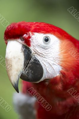 parrots beak