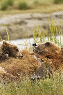 cub on mother