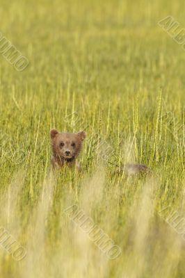 bear cub in glass