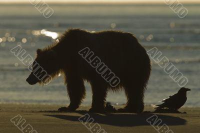 bear sunset