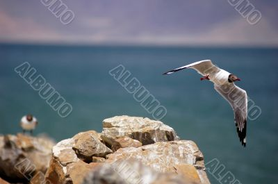 Seagull flying over a beach