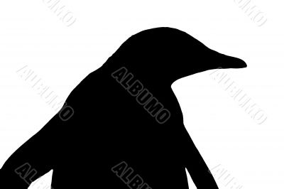 silhouette of a penguin