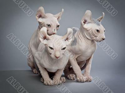 three creepy cats
