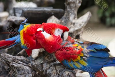 two parrots perched on the branch