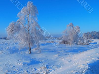 Winter landscape with birch