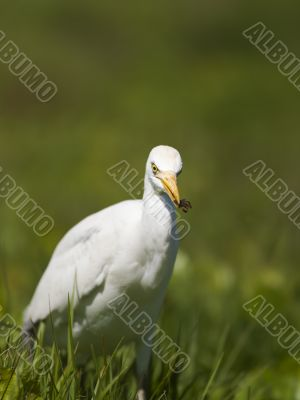 view of a white aquatic bird