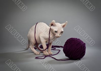 wrinkly cat and yarn