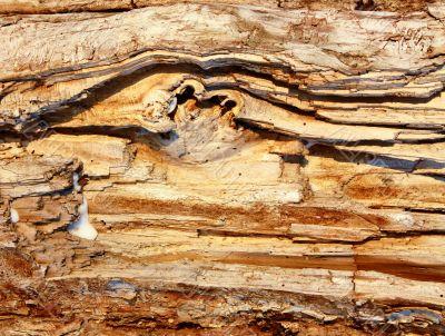 Rotten dried wood
