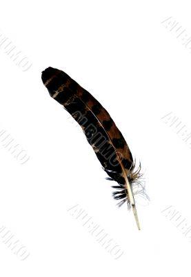 chicken feather