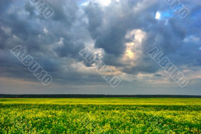 Cloudy sky over yellow field
