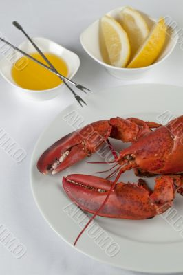 delicious lobster in plate