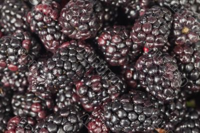 heap of blackberries