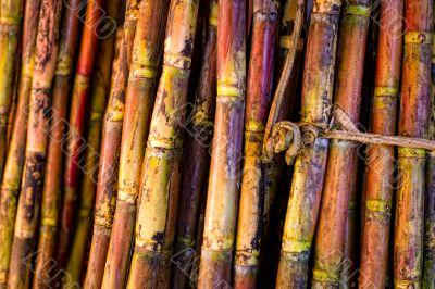 Sugar Cane Sticks