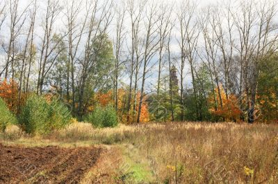 Plowed field at the edge of the forest
