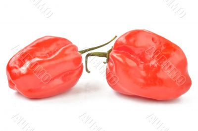 scotch bonnet peppers on a white background