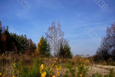 At the forest edge in autumn.