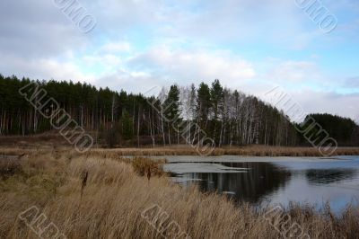 Part of the lake at the edge of a pine forest in autumn.