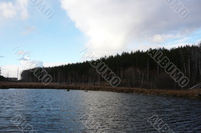 Lake, pine forest and sky.
