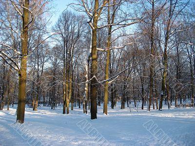 Snowy winter in Latvia