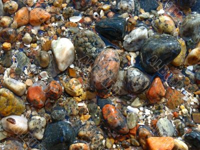 Colorful marine wet pebbles