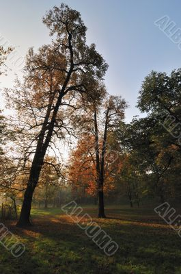 Autumn Morning Light