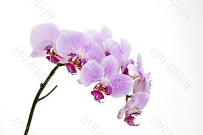 collection of beautiful pink orchids