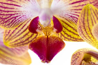 Extreme close up of orchid