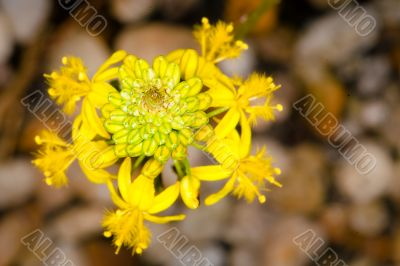 intricate yellow flower