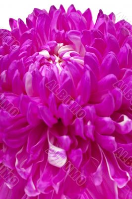 detailed shot of pink flower