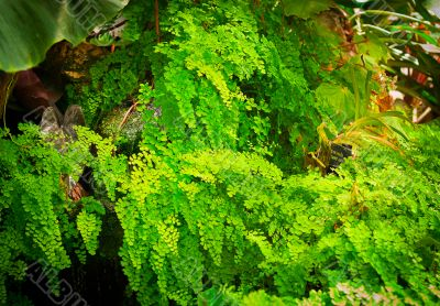bright green plants