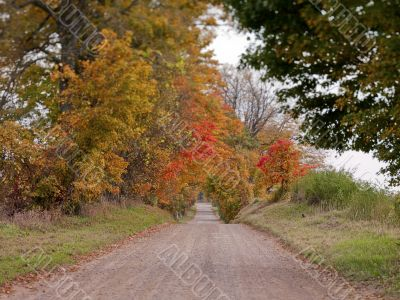 road during fall
