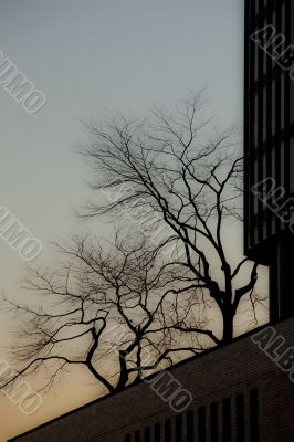 view of silhouette of trees and building against clear sky