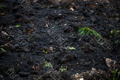 full frame of soil