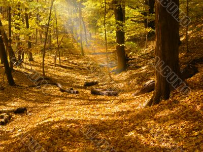sunbeam in forest