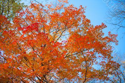 view of autumn tree