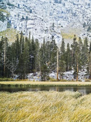 view of trees and lake