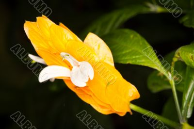exotic thin bright orange flowers