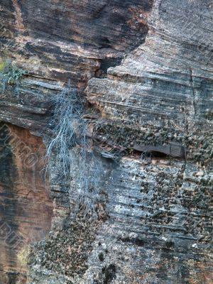 rock bushes