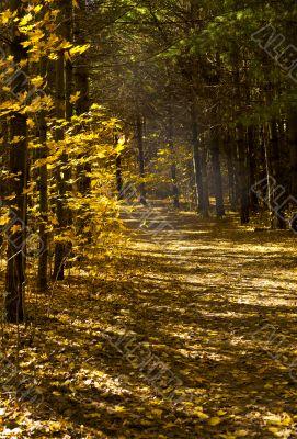 empty walking trail