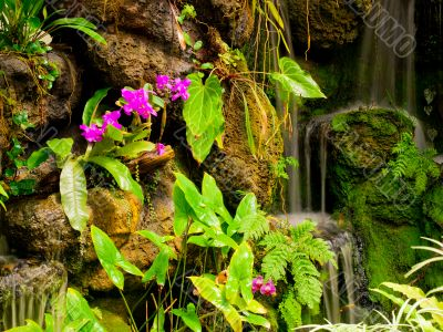 gentle waterfall and bright pink flowers