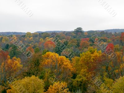 autumn trees in dense forest