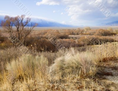 desert grasses with clouds